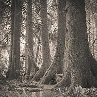 Olympic National Park, Hoh Rain Forest, and Hurricane Ridge - iPhone 11 Pro - 2020