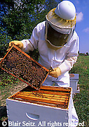 Bee Hive, Honey Farm, Bee Keeper, Cumberland Co., PA