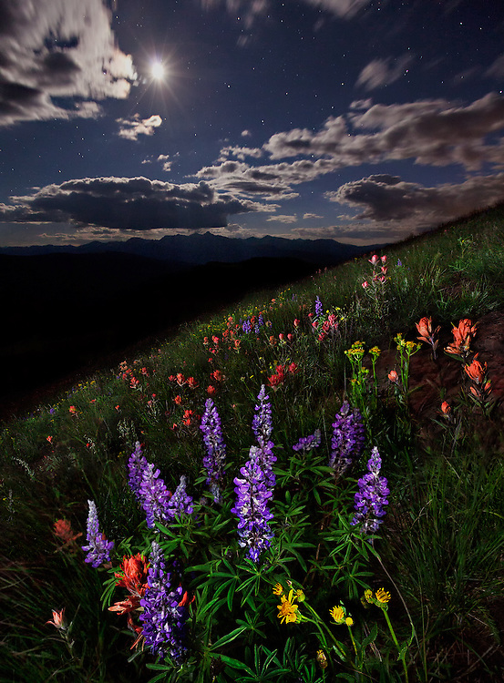Wildflowers bloom beneath the midnight moon and stars on the slopes of the Elk Mountains.