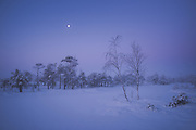 Blue hour over frozen lake in snow covered raised bog with moon still in sky, Kemeri National Park (Ķemeru Nacionālais parks), Latvia Ⓒ Davis Ulands   davisulands.com