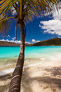 A Coconut Palm meets the Caribbean Sea at Peter Bay on St. John, USVI. In the background right you have Cinnamon Bay in the middle Cinnamon Cay, and back left Francis Bay.