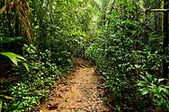 A muddy dirt hiking trail through the rainforest near Punta Rio Claro National Wildlife Refuge, Costa Rica.