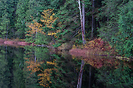 Fall foliage (mostly Vine Maples - Acer circinatum) on Mill Pond in Mission, British Columbia, Canada.