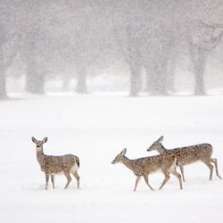 Winter in NOVA