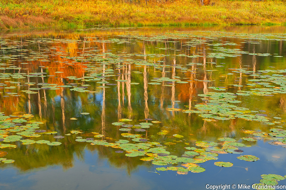 Autumn colors on Middle Lake <br />Kenora District<br />Ontario<br />Canada