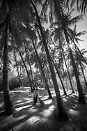 Tree in black and white. Tam Hải-Quảng Nam-Vietnam