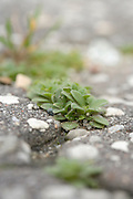 extreme close up of plants growing between the cracks in asphalt pavement
