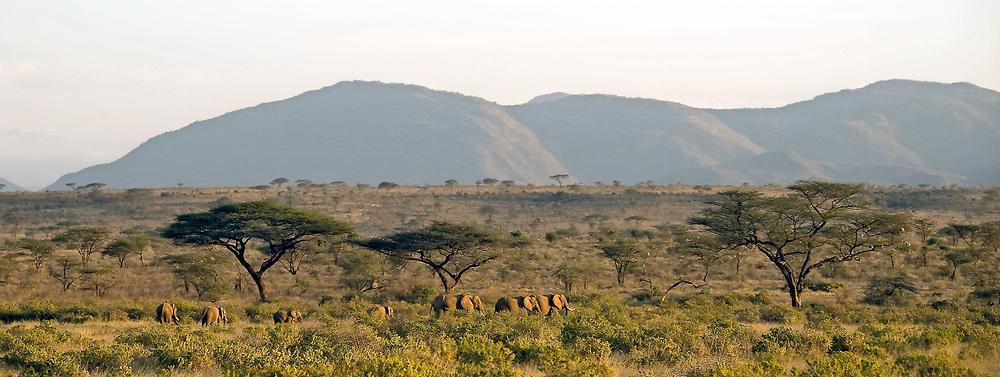 African savannah landscape with heard of elephants in Samburu NP, Kenya.