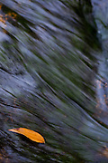 Santana do Riacho_MG, Brasil...Detalhe de uma folha na agua Alto Palacio no Parque Nacional da Serra do Cipo...Detail of a leaf on the water in Alto Palacio in the Serra do Cipo National Park...Foto: JOAO MARCOS ROSA / NITRO