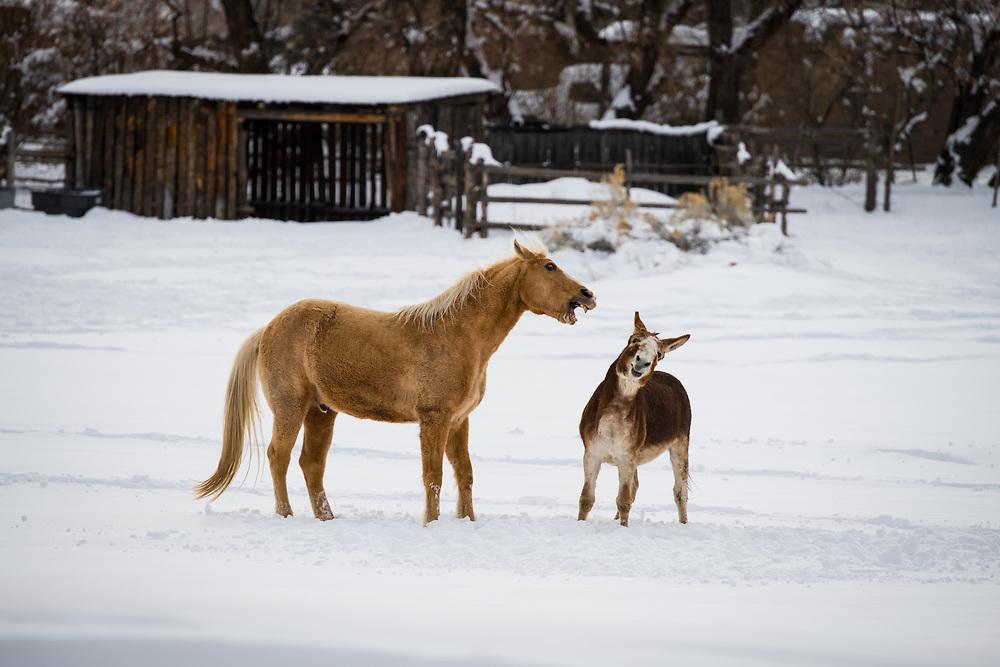 Horse and donkey confrontation, Hwy 64, El Prado, New Mexico