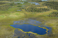 Peat bog lands and taiga boreal forest, Sjaunja Bird Protection Area, Laponia UNESCO World Heritage Site, Greater Laponia rewilding area, Lapland, Norrbotten, Sweden