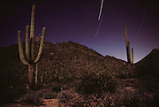 Tucson, Arizona. Saguaro Cacti and star trails near Gates Pass.