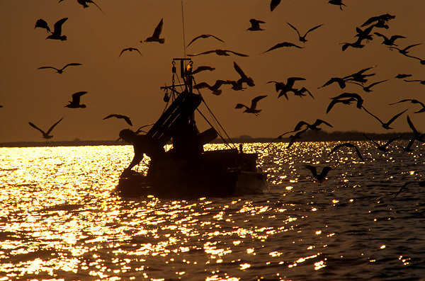 Stock photo of the silhouette of seagulls surrounding a man in a small fishing boat at sunset