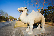 Statue of a stading camel, Spirit Way, Ming Tombs, Beijing (Peking), China