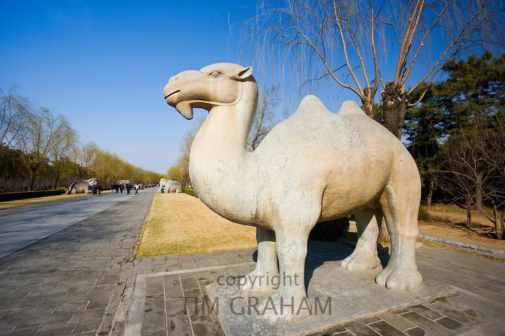 Statue of a stading camel, Spirit Way, Ming Tombs, Beijing (Peking), China