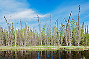 Steen River and the boreal Forest<br /> Steen River<br /> Alberta<br /> Canada