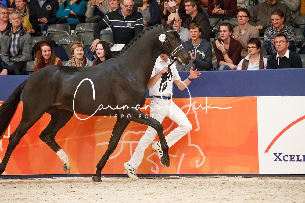535, Kostolany B<br /> KWPN Stallionshow - 's Hertogenbosch 2018<br /> © Hippo Foto - Dirk Caremans<br /> 03/02/2018553, Kremlin MD<br /> KWPN Stallionshow - 's Hertogenbosch 2018<br /> © Hippo Foto - Dirk Caremans<br /> 03/02/2018
