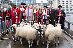 © Licensed to London News Pictures. 29/09/2019. London, UK. Broadcaster Michael Portillo leads a flock of North of England Mules across London Bridge. The British tradition dating hundreds of years sees Freeman of the City of London take up their historic entitlement to drive their sheep over the bridge whilst raising tens of thousands of pounds for the Lord Mayor's Appeal and the Woolmen's charity. Photo credit: Ray Tang/LNP