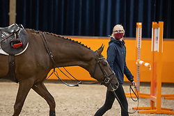 Kalf Kristel, NED, Matrix VDL<br /> Fotodag KWPN Hengstenkeuring 2021<br /> © Hippo Foto - Dirk Caremans<br /> 21/12/2020
