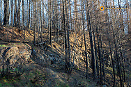 Remnants of vast forest fire along the North Umpqua River in the Umpqua National Forest, Oregon, USA
