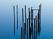 Limited Editions of 25<br /> Old Pilings in Bodega Bay California