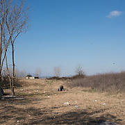 A Syrian refugee prays in the fields behind the petrol station near Idomeni.  In the last few months the fields near this petrol station have become a transit camp for thousands of refugees and migrants waiting to cross to Greek Macedonian border.