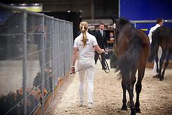 054 - Godyno<br /> KWPN Stallion Selection - 's Hertogenbosch 2014<br /> © Dirk Caremans