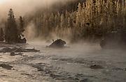 Firehole River at sunrise
