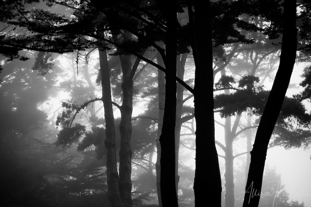 Trees become ghostly figures as evening fog creeps into the coastal woods of Big Sur<br /> <br /> Prints: https://bit.ly/forest-fog-BigSur