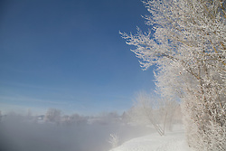 Trees on a snow covered landscape, Eichenau, F¸rstenfeldbruck, Bavaria, Germany
