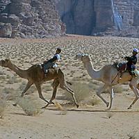 JORDAN, Bedouin camel race, Wadi Rum
