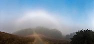 Fogbow over Briones Crest Trail, Briones Regional Park, Contra Costa County, California