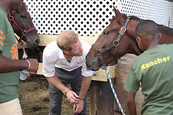 Prince Harry pets a horse at 'Nature Fun Ranch', which allows young people to speak freely with one another about important topics, including HIV/AIDS, providing them with a positive focus to guide their lives in the right direction, during his tour of the Caribbean.