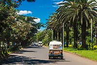 Tuk tuks driving down a palm tree lined avenue, Bahir Dar, Ethiopia
