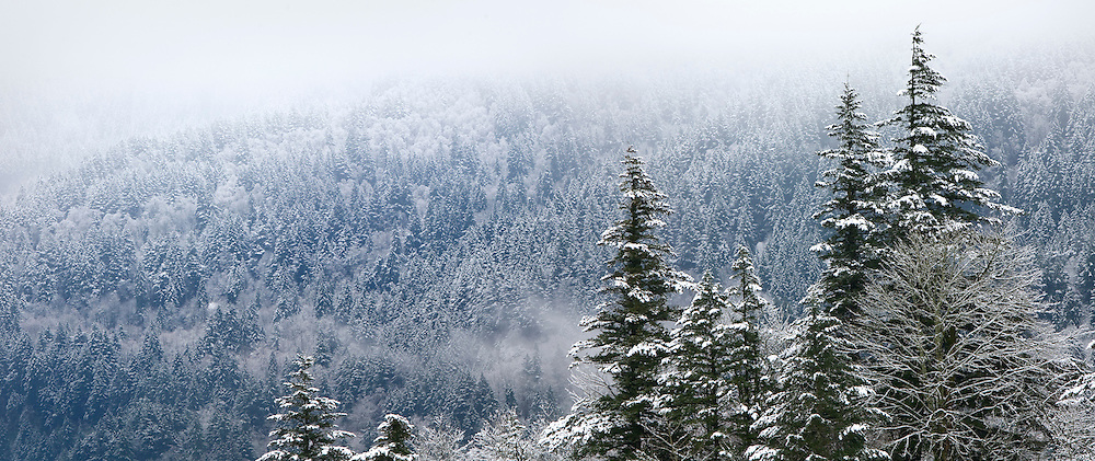 Fresh snow in the Columbia River Gorge National Scenic Area.