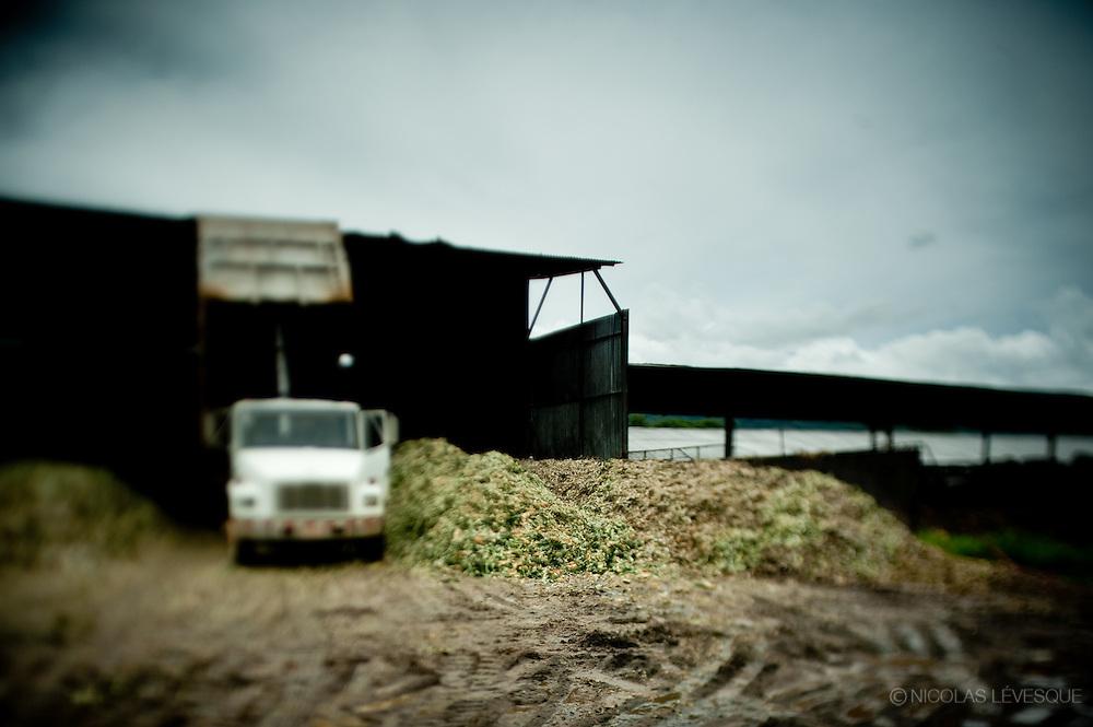 Les déchets d'ananas servent à nourrir les boeufs. Monocultures d'ananas de la multinationale Del Monte. Buenos Aires, Costa Rica 2010.