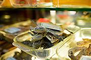 Dried lizards sold in a traditional Chinese medicine shop in Wangfujing Street, Beijing, China