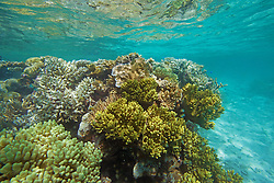 Colourful corals in Clerke Lagoon at the Rowley Shoals.