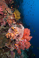 Colorful Reef Wall..Shot In Indonesia