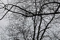 Silouette of tree against grey sky