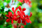 Red flower green background