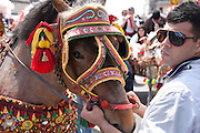 A carriage horse wears traditional odornments during the Festa di Sant' Alfio at Trescastagni, Sicily, Italy.