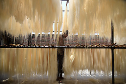 May 4, 2019 - Allahabad, Uttar Pradesh, India - An Indian worker drying vermicelli at a factory ahead of Ramadan month in Allahabad. Vermicelli used to make a traditional sweet dish popular during the fasting month Ramadan. (Credit Image: © Prabhat Kumar Verma/ZUMA Wire)