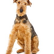 20160405 Martha Dogs
