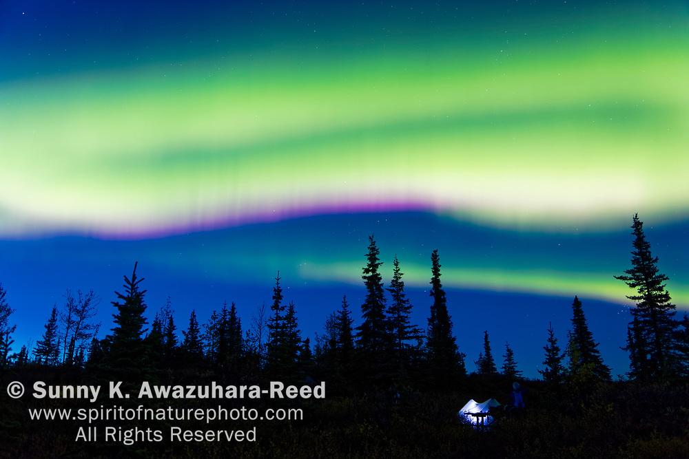 Northen Lights dancing over tundra hill in Denali National Park & Preserve, Interior Alaska, Autumn.