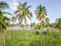 Aerial view of a forest of palm trees on Tahiti coast, French Polynesia.