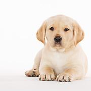 Judi Puppies