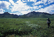 A lone backpacker heads for the headwaters of the Sanctuary River, Denali National Park, Alaska.