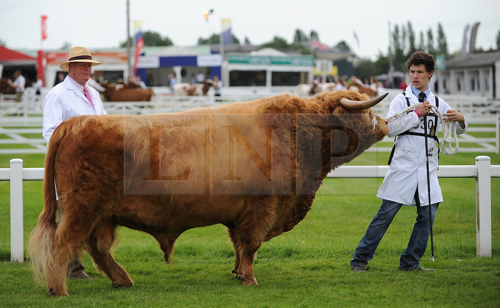 © Licensed to London News Pictures. <br /> 08/07/2014. <br /> <br /> Harrogate, United Kingdom<br /> <br /> A bull is led in front of judges on the first day of the Great Yorkshire Show. The show is England's Premier Agricultural Event and is based on the 250-acre Great Yorkshire Showground near Harrogate. The Main Ring is the hub of the Show providing a setting for international show jumping and world class cattle parade. The showground is filled with animals, country demonstrations, have-a-go activities and rural crafts.<br /> <br /> Photo credit : Ian Forsyth/LNP