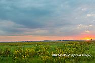 63893-03714 Sunrise and prairie Prairie Ridge State Natural Area Marion Co. IL